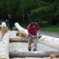 Forestry Commision, Carie Burn (2)
